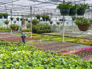 Une pépinière avec des plantes et des fleurs