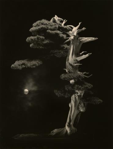 oeuvre photographique de Masao Yamamoto