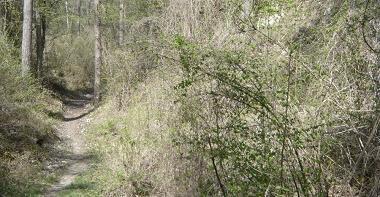 Espace naturel sensible - Le bois des Palis