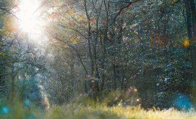 Espace naturel sensible du bois de la Rochette