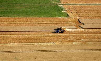Moisson d'un champ de céréales