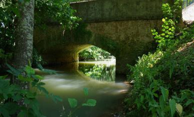 Un cours d'eau qui passe sous un pont dans une forêt