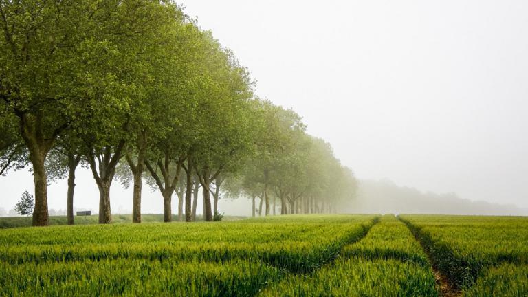 Journéee européenne des Allées d'arbres